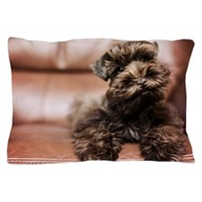 12 Week old mocha miniature schnauzer  Pillow Case