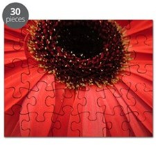 Close up of Gerbera flower Puzzle