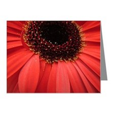 Close up of Gerbera flower Note Cards (Pk of 10)