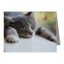 Napping gray tabby kitten Note Cards (Pk of 10)