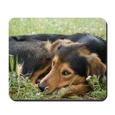 Dog lying down curled up on lawn Mousepad