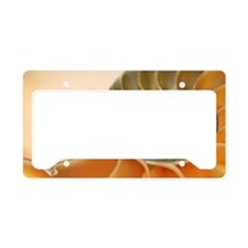 Cross section of a nautilus s License Plate Holder