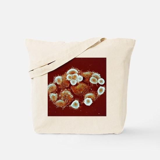 HeLa cells, SEM Tote Bag
