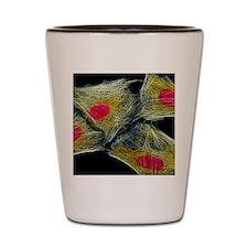 HeLa culture cells Shot Glass