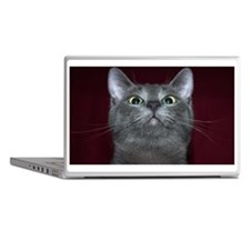 Russian blue cat sniffing air Laptop Skins