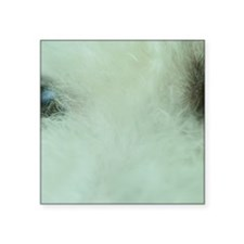 "Close-up of a Bichon Frise Square Sticker 3"" x 3"""