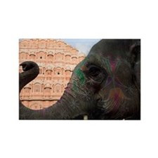Close-up of an elephant in front  Rectangle Magnet