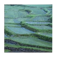 Rice paddy in Otari Village, Nagano,  Tile Coaster