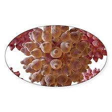 Human papilloma virus particles, ar Decal
