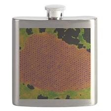 Human papilloma virus particles, TEM Flask