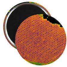 Human papilloma virus particles, TEM Magnet