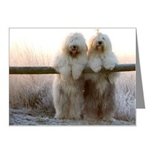 Old English Sheepdogs Note Cards (Pk of 20)