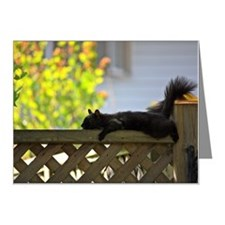 Black Squirrel Note Cards (Pk of 20)
