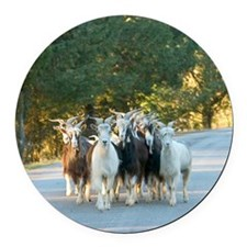 Herd of goats running down road Round Car Magnet