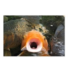 Koi in feeding pond. Postcards (Package of 8)