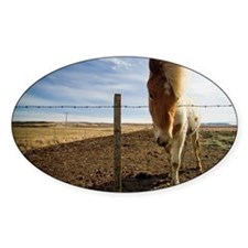 Horse standing beside barbed wire f Decal