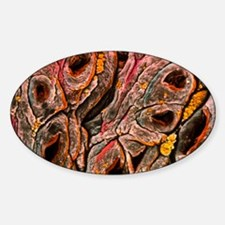 Intestine showing coeliac disease Sticker (Oval)