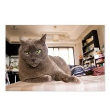 Serious Russian blue cat  Postcards (Package of 8)