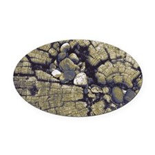 Cross-section of a tree stump, emb Oval Car Magnet