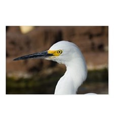 Snowy egret Postcards (Package of 8)
