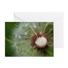 Dandelion flower macro with much det Greeting Card