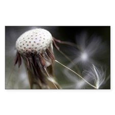 The last seeds of a dandelion  Decal