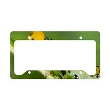 Close up of caterpillar License Plate Holder