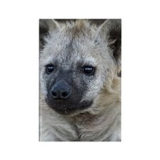 Portrait of a young hyena Rectangle Magnet