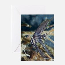 Zebra batfish Greeting Card