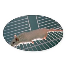 Laboratory gerbil Decal