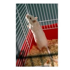 Laboratory gerbil Postcards (Package of 8)