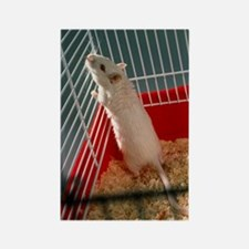 Laboratory gerbil Rectangle Magnet