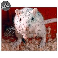 Laboratory gerbil Puzzle