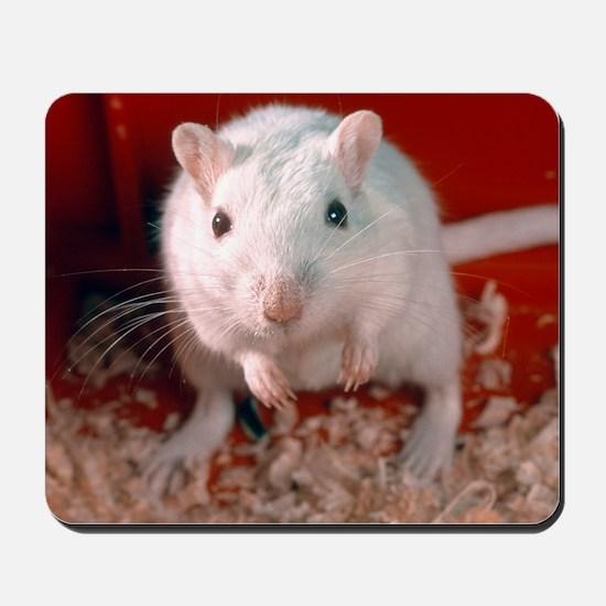 Laboratory gerbil Mousepad