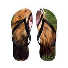 Yawning male lion Flip Flops