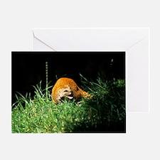 Yellow mongoose Greeting Card