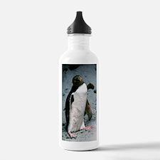 Yellow-eyed penguin Water Bottle