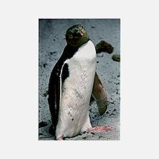 Yellow-eyed penguin Rectangle Magnet