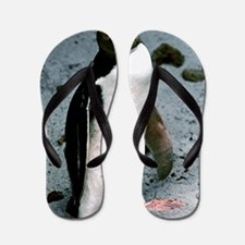 Yellow-eyed penguin Flip Flops