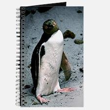 Yellow-eyed penguin Journal