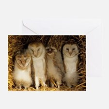 Young barn owls Greeting Card