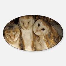 Young barn owls Decal