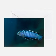 Zebra cichlid Greeting Card