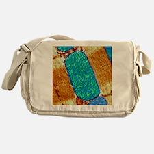 Mitochondrion, TEM Messenger Bag