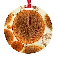 Mitochondria Ornament