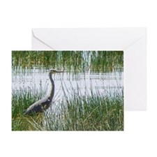 grey heron kenya collection Greeting Card