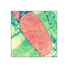 "Mitochondrion, TEM Square Sticker 3"" x 3"""