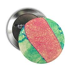 "Mitochondrion, TEM 2.25"" Button"