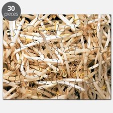 Mung bean sprouts Puzzle