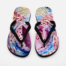 Nucleus Flip Flops